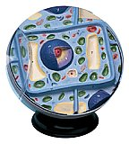 Plant Cell Model only Grades: 5 - 12 AEP-2056
