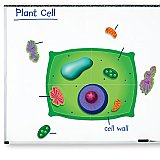 Giant Magnetic Plant Cell LER 6038