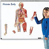 Double-Sided Magnetic Human Body LER 6044