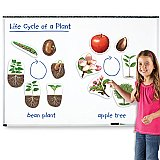Giant Magnetic Plant Life Cycles LER 6045