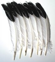 Imitation Eagle Quill Feathers - 12 Pcs CK-4512