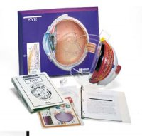 Eye Model Activity Set AEP-2640