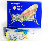 Grasshopper Model Activity Set Grades: 5 - 12 AEP-2753