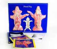 Fetal Pig Model Activity Set Grades: 5 - 12 AEP-2757