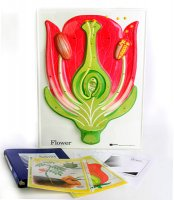 Flower Model Activity Set Grades:3-9 AEP- 2830