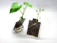 Seed Germination Kits Grades: K - 8 AEP- 8100