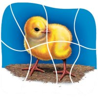 How a Chick Hatches Wooden Layered Puzzle A15-ID99051
