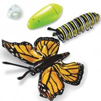 Inflatable Butterfly Life Cycle  LER 1801