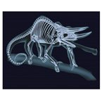 Tilt & View Animal X-Rays LER 2927