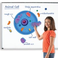 Giant Magnetic Animal Cell LER 6039