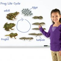 Giant Magnetic Frog Life Cycle LER 6041