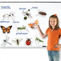 Giant Magnetic Insects LER 6042