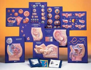 Human Reproduction Master Set/9 Grade 5-12 AEP2614