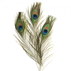 Peacock Feathers 12 pcs CK-4515
