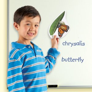 Giant Magnetic Butterfly Life Cycle LER 6043