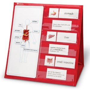 Human Body Magnetic Tabletop Pocket Chart LER 6505